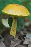 Mushroom 1766