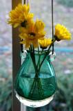 Window flowers 6483