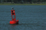 Harbor buoy 6170