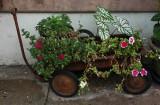 NO9556 Garden