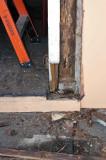NO9827 Formosan termites in door frame