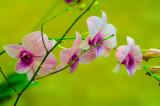 Violet Orchids.jpg
