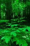 _DSC0005 A Sprinking of Leaves.jpg