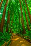 _DSC0021 The Forest Primeval.jpg