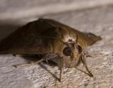 Moth Eyes (and fat cheeks!)