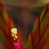 Tiny Tillandsia Flower