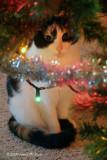 Taffy  Under the Tree (11984)