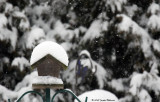 Snowed-In Bird Feeder (14076)