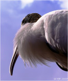 Stork Up There...