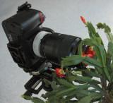 2/8/07: This + Next = Tulip Shoot Through