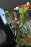 2/8/07 - Making a Shoot Through