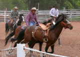 zP1000347 Three pickup riders chase determined bronc c7x5 a1.jpg