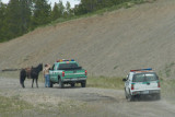 zP1000405 Small hazing team near Yellowstone.jpg