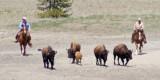 z_MG_4477 DoL hazes 5 bison to capture 06-20-07.jpg