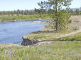 zP1000710 Bison habitat where hoof and paw prints were found beside Madison River.jpg