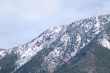 zP1020131 Mountain trees - tripod - large aperture.jpg