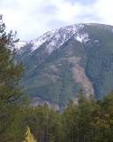 zP1020133 Mountain trees - tripod - large aperture - mild photoshop.jpg