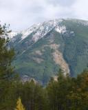 zP1020134 Mountain trees - tripod - f11 aperture - mild photoshop.jpg