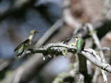IMG_8915 Hummingbirds.jpg
