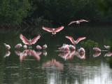Birds of Sanibel Island