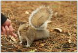 Squirrel have your finger.jpg