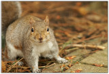 Squirrel want some.jpg