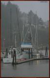 Fish Boats at Dock.jpg