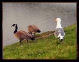 birds_winchester_bay