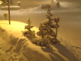 Baby trees between two snowfalls