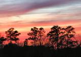 evening sky with trees.jpg