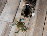 k1 meets the blue crab
