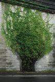 2 dimensional Tree