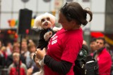 Happyness at Street Dog Show at Times Sqare. New York (4).jpg