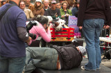 Happyness at Street Dog Show at Times Sqare. New York (7).jpg