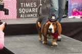 Street funny Dog Show at Times Sqare. New York (3).jpg