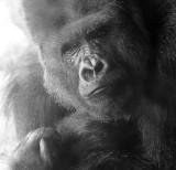 Givskud Zoo - July 07