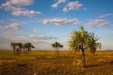 Hawk Dreaming plains landscape