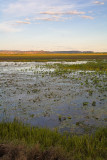 Wetlands of Hawk Dreaming at sunset