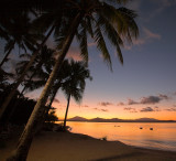 Dunk Island sunset and palm trees