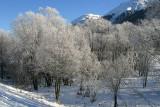 Flower-tree in winter
