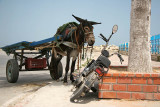 'Poor thing, you must be exhausted,' Donkey said to the motorbike