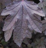 veiny leaf.jpg(131)
