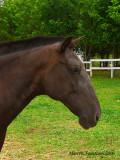 Cavalos do Sítio Toca da Coruja