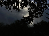 Silhouetted Leaves