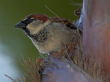 Sparrow In a Palm