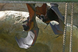 2 Bats