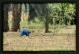 Luxor Agriculture