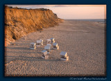 Sylt Rotes Kliff in sunset light