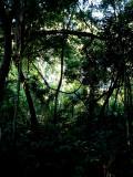LOWLAND FOREST.JPG