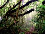 MOSS FOREST.JPG